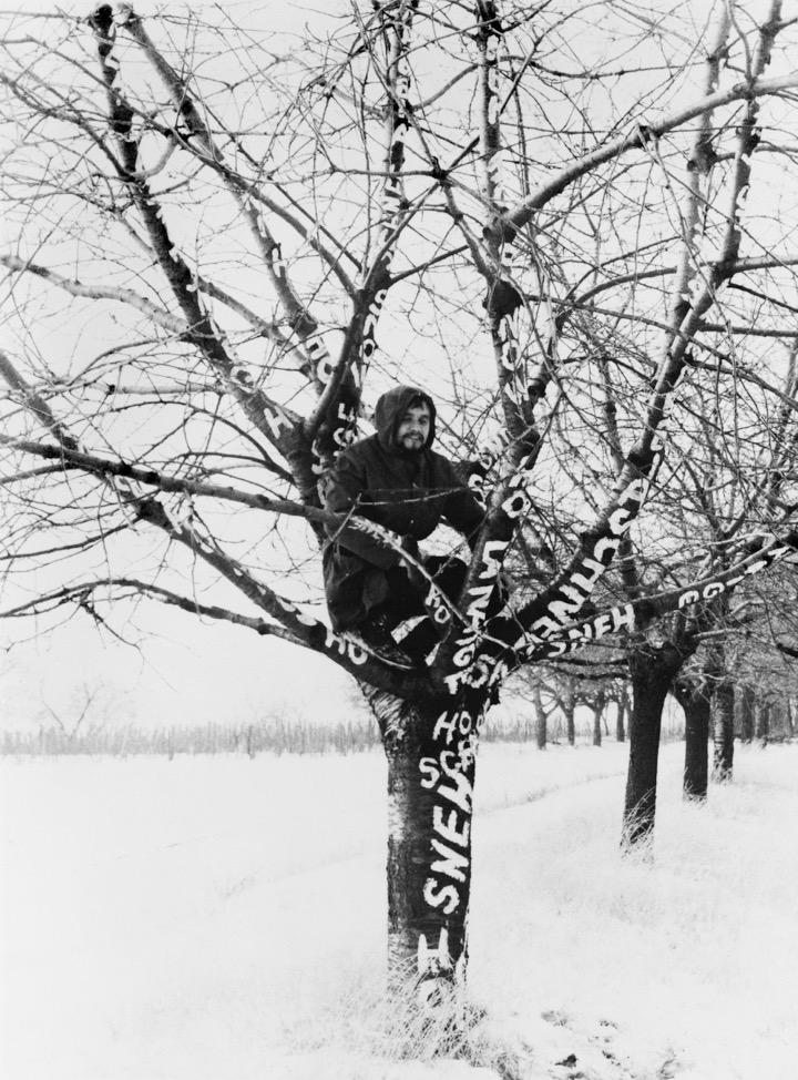 Dezider Tóth, Sneh na strome, 1970